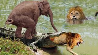 Elephant of The God! Mother Elephant Save Her Baby From Crocodile – Lion Escape Crocodile Ambush