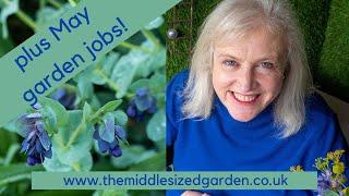 May garden tour - plus some garden jobs for May!