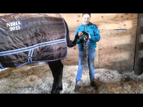 ¤How To Put A Tailbag On A Horse¤