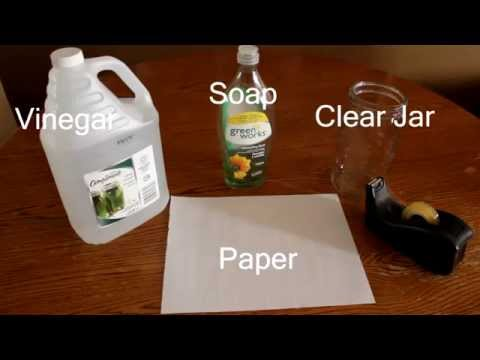 Fast, Easy and Effective Way To Catch Fruit Flies With Vinegar