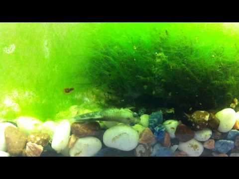 P2 Aquarium - Guppy for everyone!