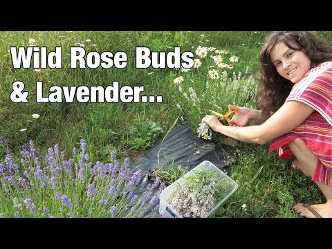 Using Fresh Cut Flowers in my Products (Rose Buds & Lavender)