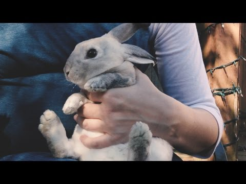 How To Hold A Rabbit and How To Clip A Rabbit's Nails
