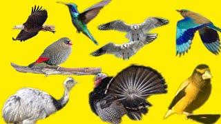 NAMES OF BIRDS पक्षांची नावे - The Most Popular