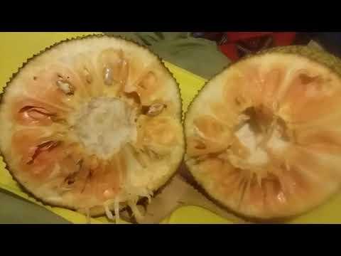 Signs of a ripe jackfruit