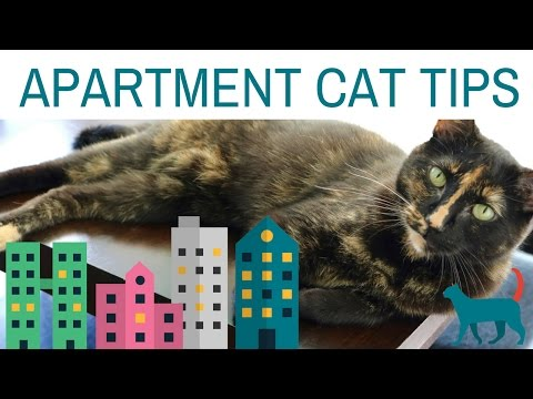 5  APARTMENT CAT TIPS! (tips for enriching your cat's environment)