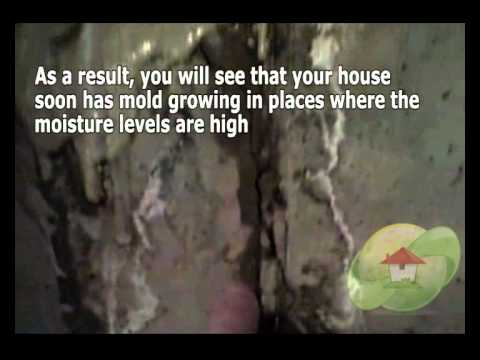 The best way to Cleanup and Removal of Mold from wall in Maitland FL - MoldRemoval.Com
