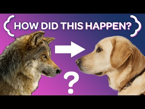 Where Dogs REALLY Came From