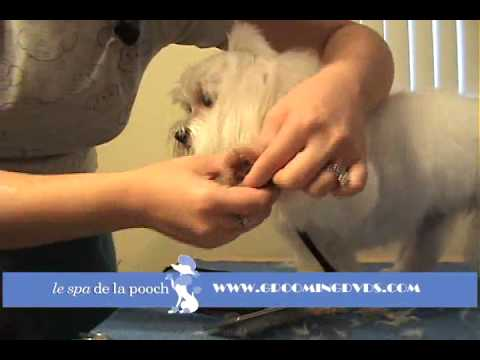 How To Round The Feet On A Dog-Trim A Dog's Foot-How To Groom A Maltese