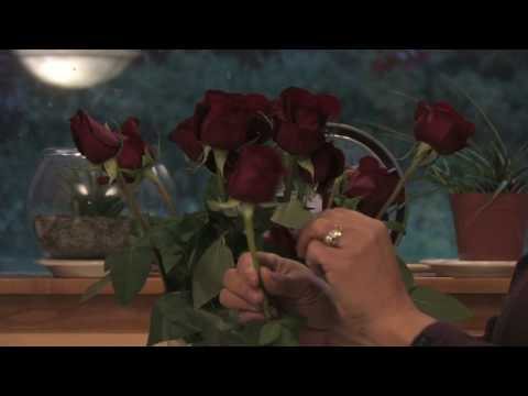 Gardening Tips : How to Keep a Dozen Red Roses Fresh