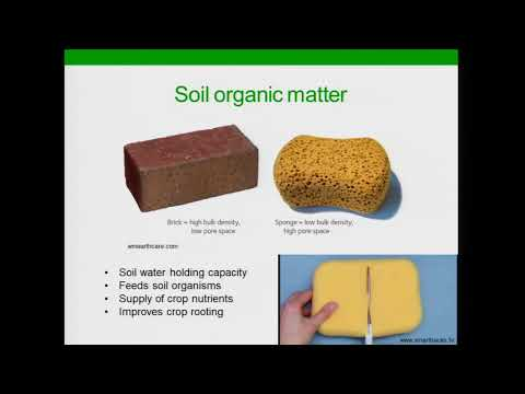 Top 10 Ways Cover Crops Build Soil Health - Rob Myers