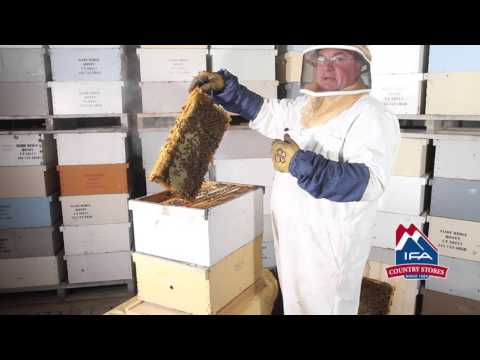 How To Inspect A Beehive • IFA Beekeeping Class 2