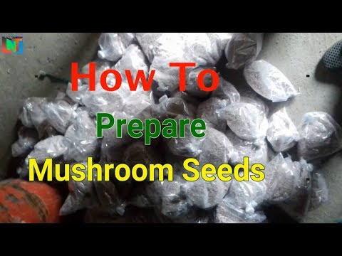 HOW TO prepare MUSHROOMS SEEDS