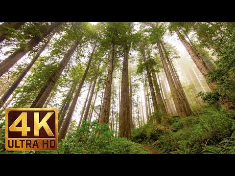 3.5 Hours Of Background Piano Music & Redwood National and State Parks Photography in 4K - Part 13