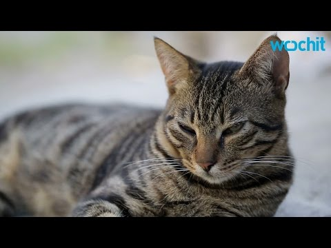 Here's How To Cheer Up A Depressed Cat