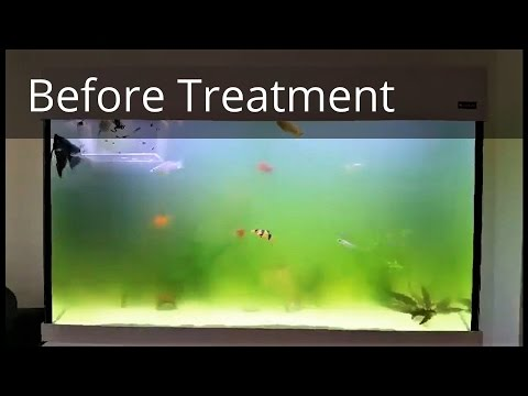 How to Get Rid of Green Aquarium Water in 2 Hours