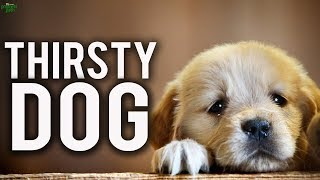 The Thirsty Dog (Life Changing Story)