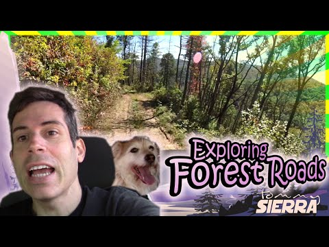 Exploring Forest Roads!