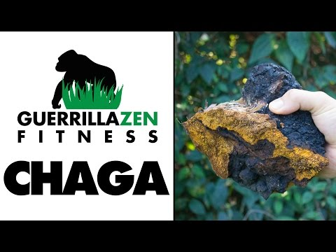 Benefits of Chaga & How to Make Tea With It