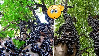 12 Strangest Trees You Don't Believe Exist