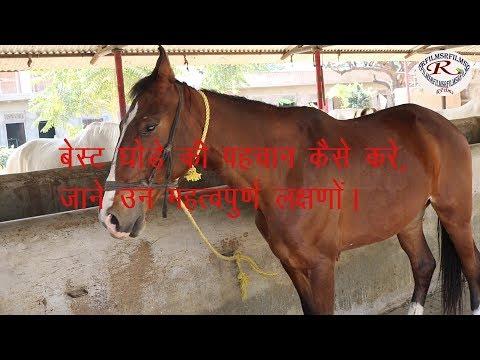 बेस्ट घोड़े की पहचान कैसे करें, How to identify the best horse