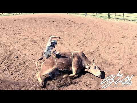 WILD BULL RIDING at the Fly'n W Ranch