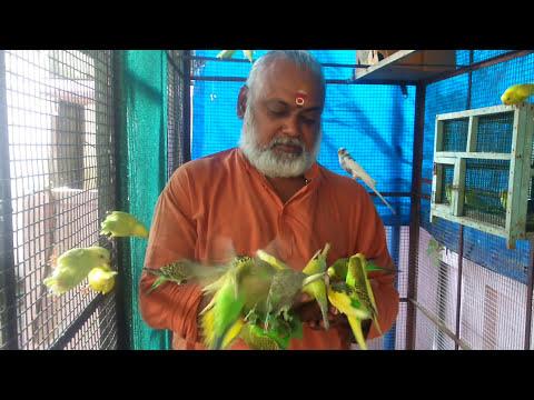 Kerala love birds
