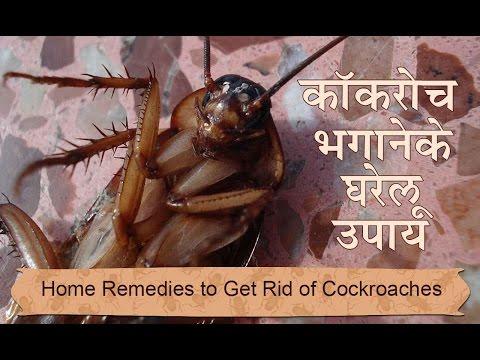 कोकरोच भगाने ने घरेलू उपाय | Home Remedies To Get Rid Of Cockroaches from Home in Hindi