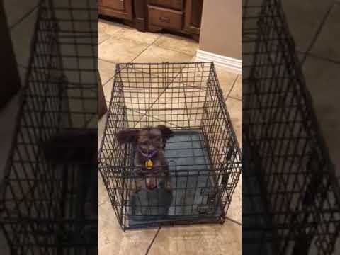 Dog Barking/Crying in the Kennel