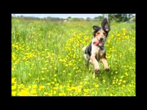 Cure For Kennel Cough