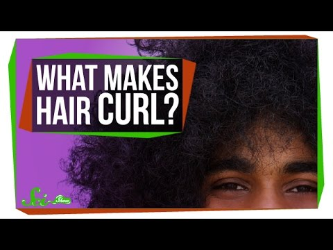 What Makes Your Hair Curl?