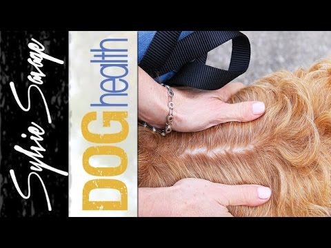 Dog dandruff - how to get rid of dry flaky skin