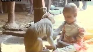 A monkey cares child