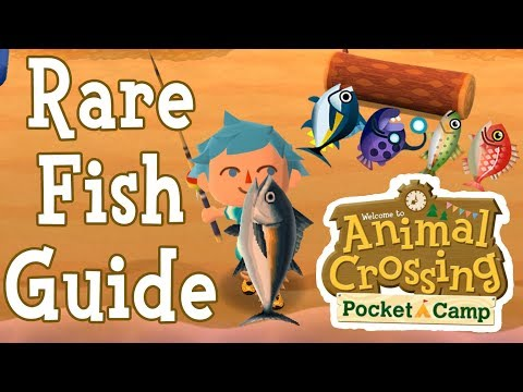 ANIMAL CROSSING POCKET CAMP RARE FISH GUIDE! How To Find Rare Tuna, Rainbow Trout & Koi Fish