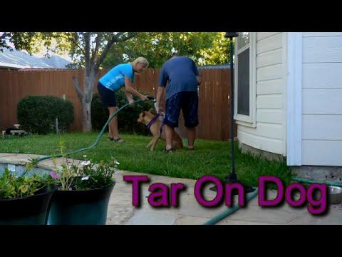 Tar On Dog!
