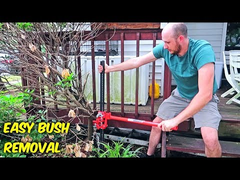 Easiest Way to Remove Bush Stumps!