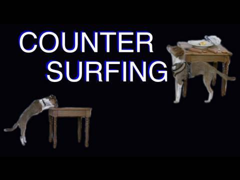 Tutorial: Solving Counter Surfing- Clicker Dog Training