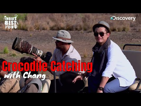 Chang spots a Crocodile in Ranthambore National Park   India's Best Jobs   Discovery Channel India