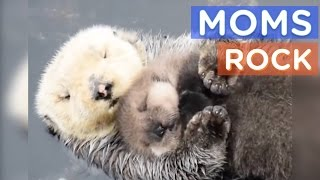 Best Animal Moms Ever | Motherly Animals Compilation | The Dodo
