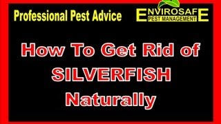 How To Get Rid Of Silverfish Fast