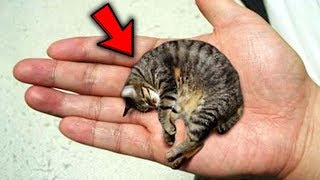 Download Top 10 Pets YOU WON'T BELIEVE EXIST! Video
