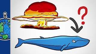 What Nuclear Bombs Taught Us About Whales