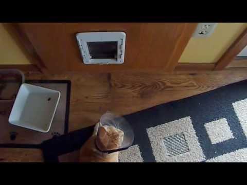 Cat runs into doggie door while wearing an e-collar cone