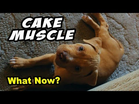 The FUTURE of CakeMuscle