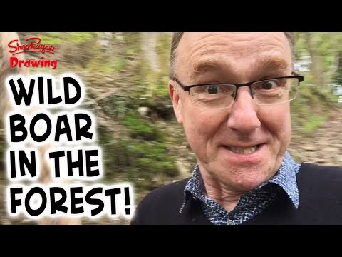 Wild Boar in the Forest!