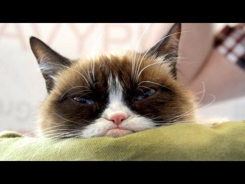 Grumpy Cat visits Navy Pier