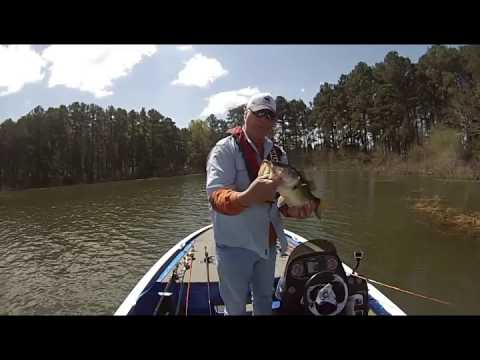 Toledo Bend Bass fishing - Punching Haygrass  3/23/2015