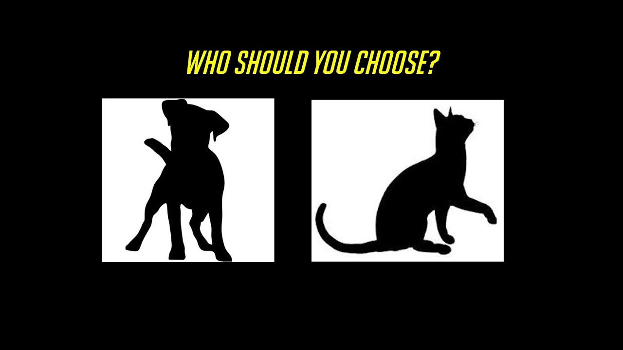 Cat vs Dog - Best Support Class