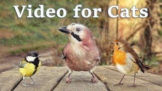 Videos for Cats to Watch - 8 Hour Birds Bonanza - Cat TV Bird Watch