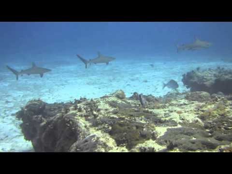 Sharks in Cozumel